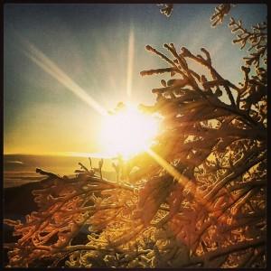 Lever de soleil du 1ier janvier 2014